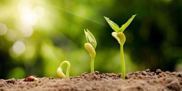 Výsledek obrázku pro růst kytky