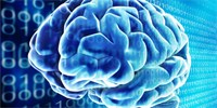 Vědci se pokusí simulovat mozek, poslouží k tomu miliony procesorů