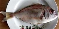 Ryby vám dají energii, i když je nebudete jíst