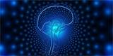 Neuralink 28. srpna vydá další zprávu o svých pokrocích