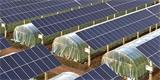 O novém trendu. Jmenuje se agrivoltaika a umožňuje využít jednu půdu dvěma způsoby naráz
