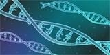 Kvůli Excelu se měnily názvy lidských genů. Vědci měli problém s jejich zápisem
