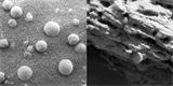 Vyskytují se na Marsu organismy podobné houbám? Divoká spekulace čelí kritice