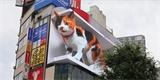 Tokio není jen olympiáda. Svět uchvátila jedna místní kočka. Hodně spí a žije na obřím 3D displeji