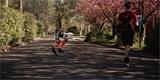 """Bipedální robot Cassie """"uběhl"""" 5 kilometrů. Trvalo mu to necelou hodinu"""