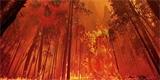 Kouř z lesních požárů je v některých směrech škodlivější než emise z aut a průmyslu