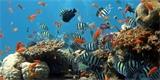 Klimatické změny ohrožují až 60 % všech druhů ryb