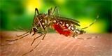 Geneticky modifikovaní komáři nesou smrtící vlohu. Vypustili je na Floridě