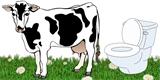 Vědci naučili krávy chodit na záchod. Doufají, že tak sníží jejich emise skleníkových plynů