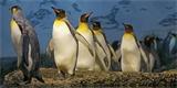 Google pomáhá Linuxu dostat na platformu nové aplikace a hry