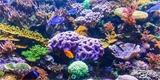 Nový výzkum: Všechny korálové útesy světa mohou být do roku 2100 mrtvé
